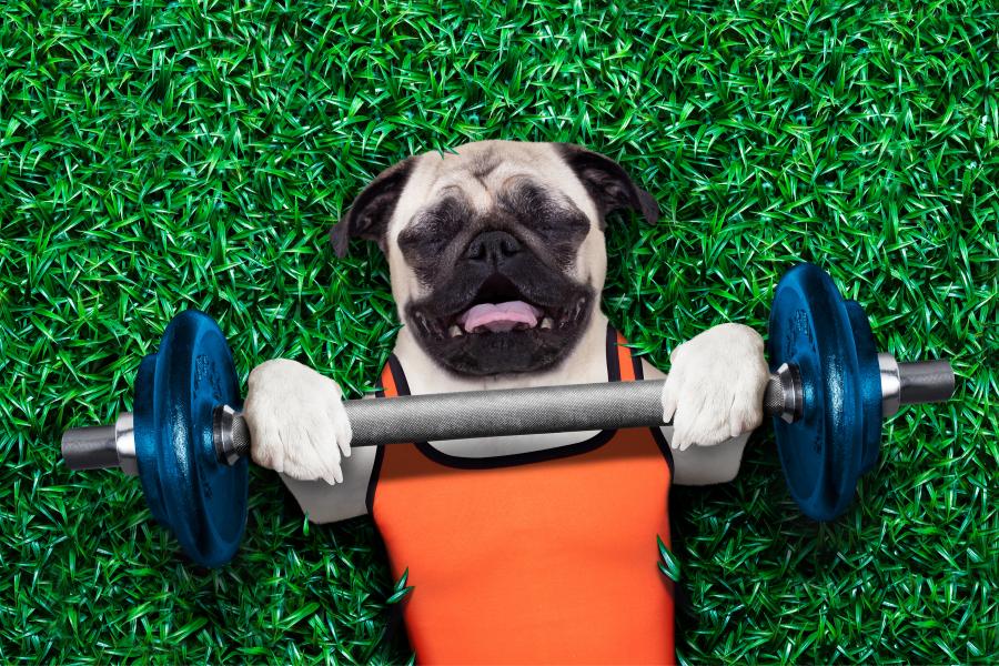 10 succestips om je hond slank te houden