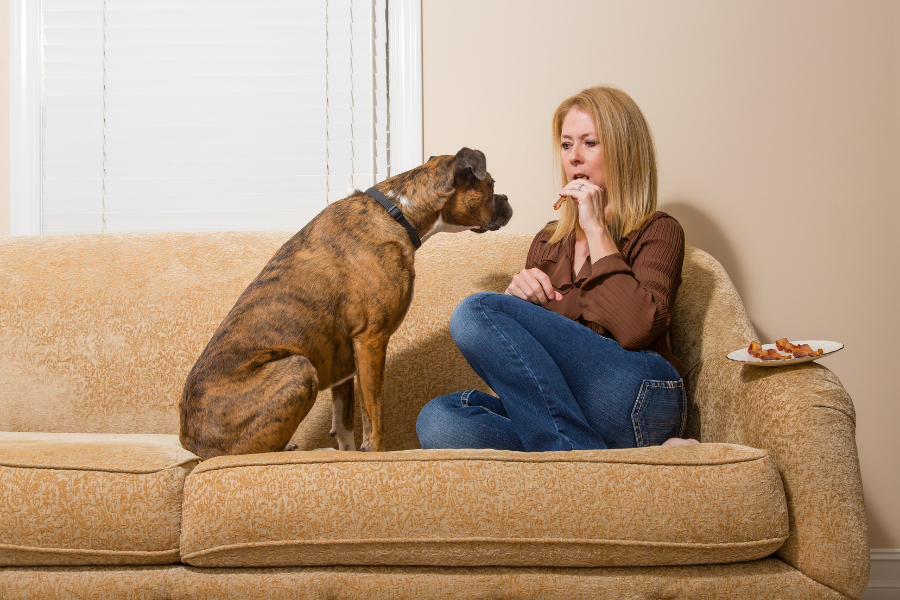 Bedelen en schooien afleren bij je hond